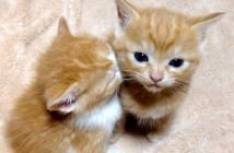 隣の子猫に顔を埋める子猫