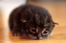 ヨチヨチ歩く子猫