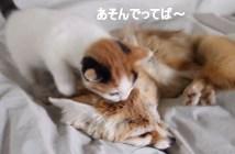 遊んで欲しい子猫