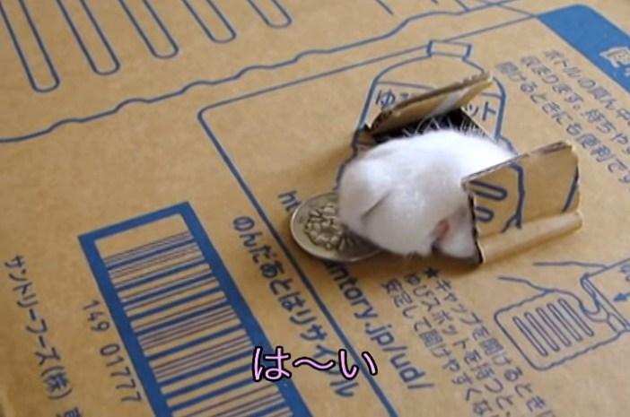 猫貯金箱から猫の手
