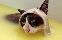 風呂が気持ちいい猫