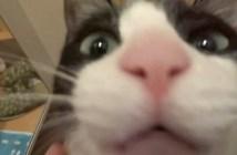 会いたくて声が震える猫