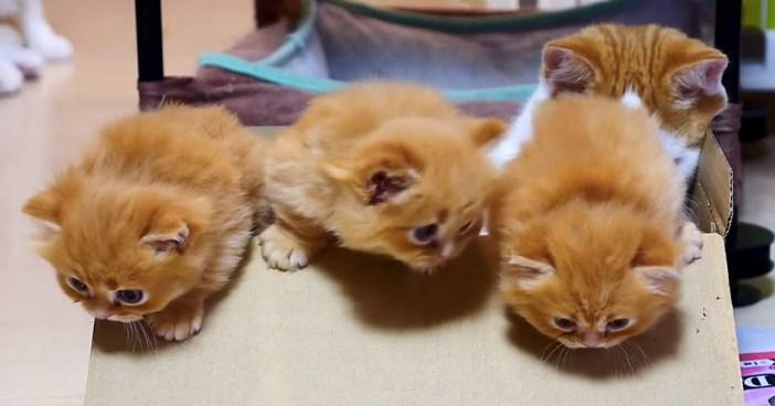 箱から脱走する子猫達