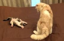 兄猫を誘う子猫