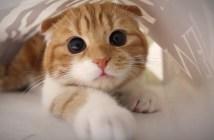 目をクリクリさせて遊ぶ子猫