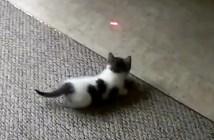 なぜかカーペットから出られない子猫