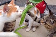草と間違われて猫パンチされる猫