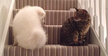 子犬と猫が仲良くなる