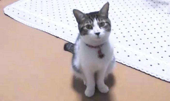 寝ようと誘ってくる猫