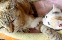 猫を起こす子猫
