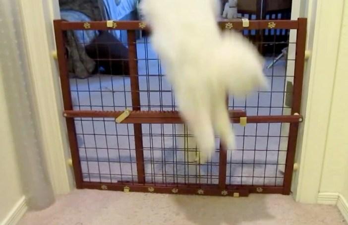 お手本を見せる母猫