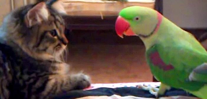 子猫とオウム