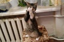 必死でお願いする猫