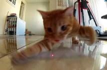 レーザーポインターを追いかける猫