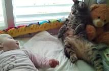 赤ちゃんとの接し方が分からない猫