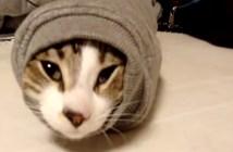 袖で立ち往生する猫
