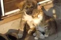幸せそうに寄り添う子犬と子猫
