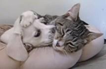 大好きな猫と犬