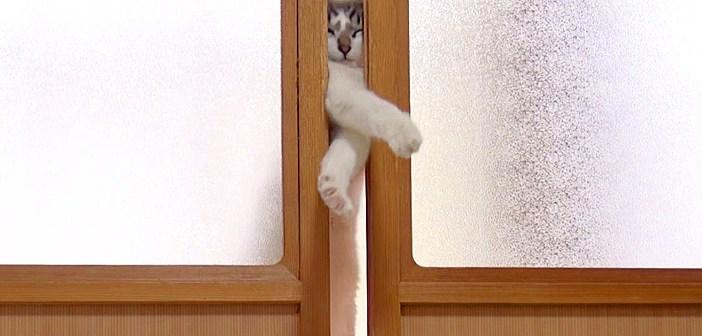 ドアを開けたい猫