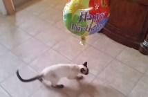 風船をくわえて離さない猫