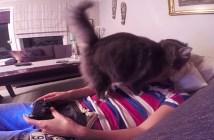 ゲームを止めさせようとする猫