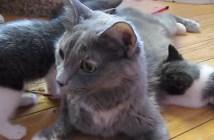 ごはんの時間に子猫を呼ぶ母猫