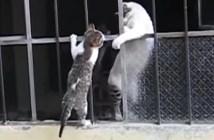 手助けする母猫