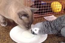milk_cat