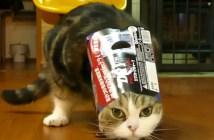 抜けなくなった猫