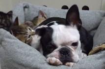 犬の耳が大好きな子猫