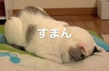 suman_cat