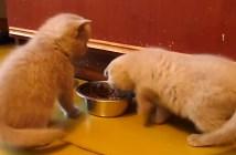 やさしい猫パンチを繰り出す子猫