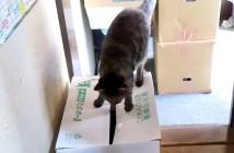 ダンボールに乗った猫ビックリ