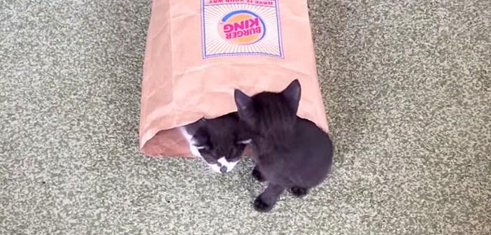 子猫が出て来る紙袋