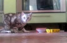 隠れてご飯を食べる猫