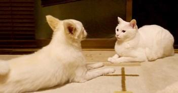 犬に話しかけられる猫