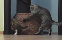 isu_cat