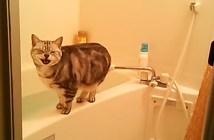 盗撮に気づいた猫の反応
