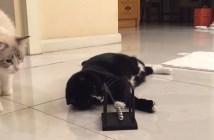 ニュートンのゆりかごで勉強する猫