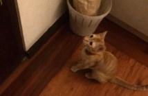 犬の帰りを待つ猫