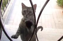 玄関先まで犬を迎えにくる猫