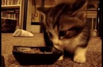 にゃむにゃむと言いながらご飯を食べる子猫