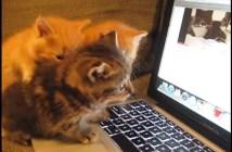 おしゃべりする子猫
