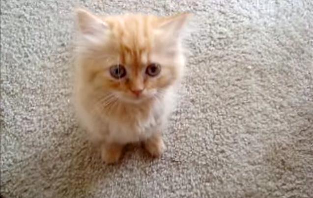 立ち上がる猫