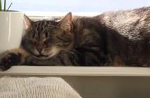 指パッチンでワナワナする猫
