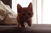 ソロリソロリと近づいてくる子猫