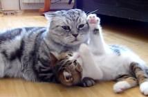 先輩猫と遊びたい子猫