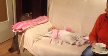 赤ちゃんを覗きにくる猫