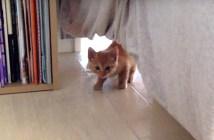 ベッドの下から恐る恐る出てくる子猫