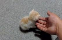 保護されたボロボロの子猫